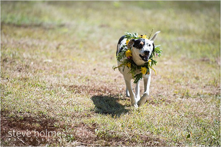 011_dog-running-in-field-with-floral-wreath-around-neck