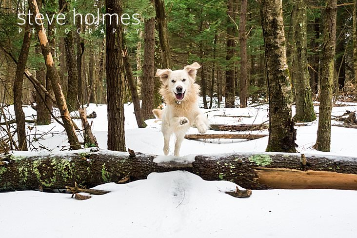 Dog leaps over log in the snow